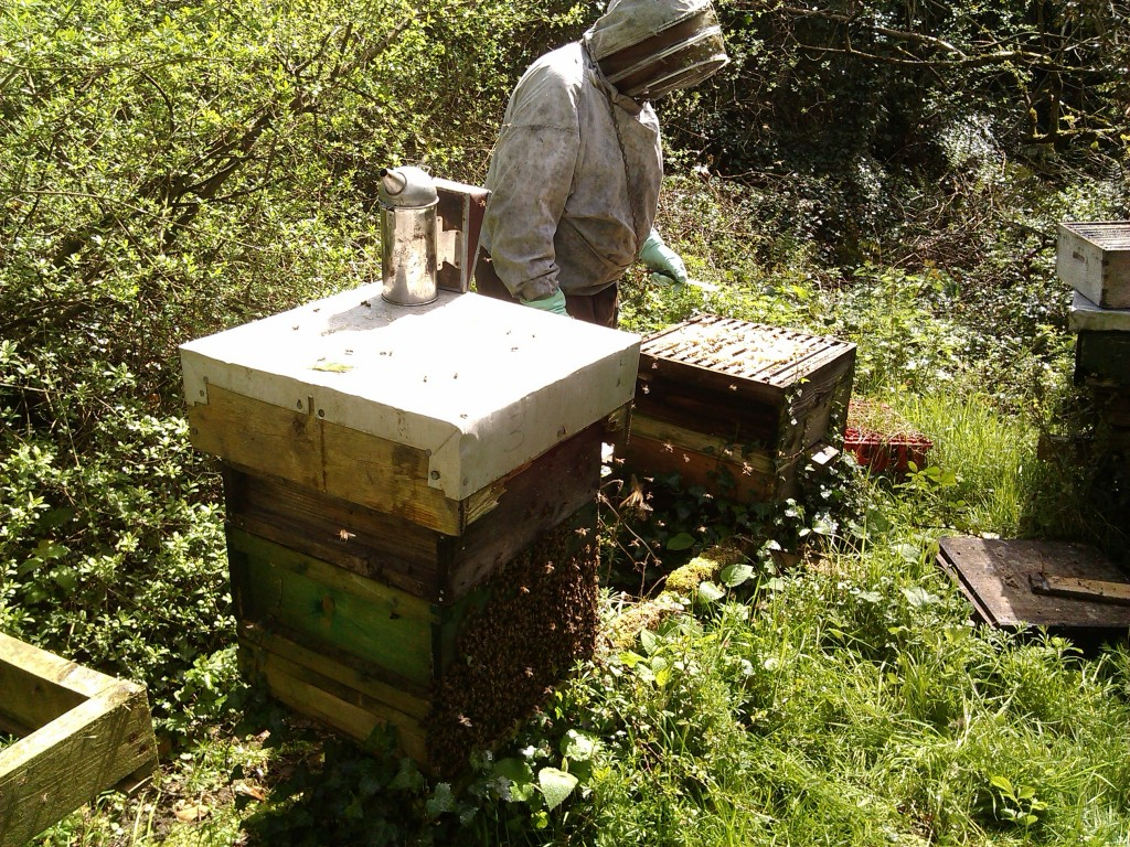 Opening the hives
