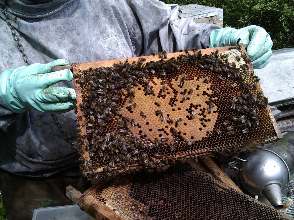 Plenty of bees in the hives
